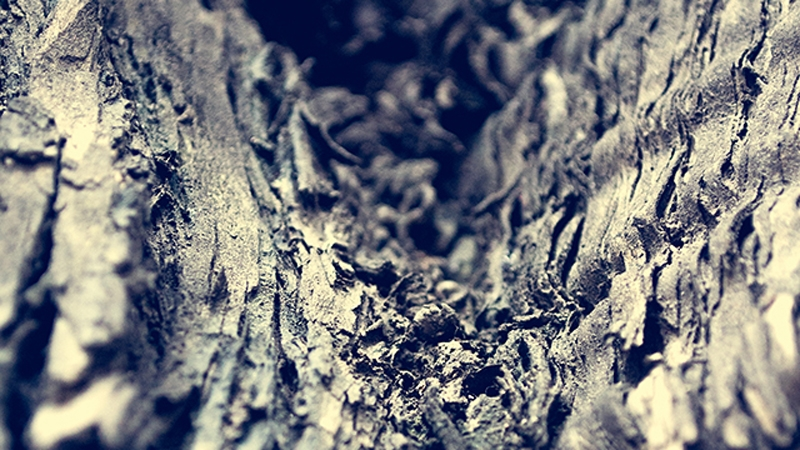 Read more about the article Crevice of a Tree