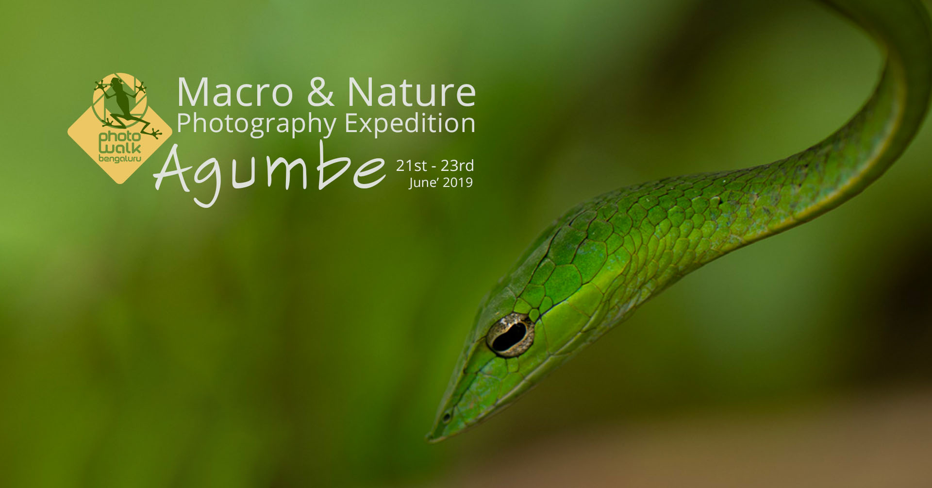 Macro & Nature Photography Expedition – Agumbe